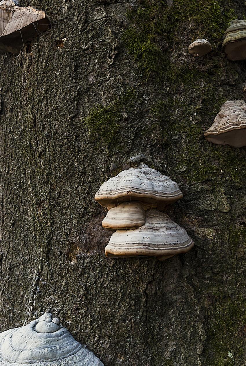 mushroom bark tree texture