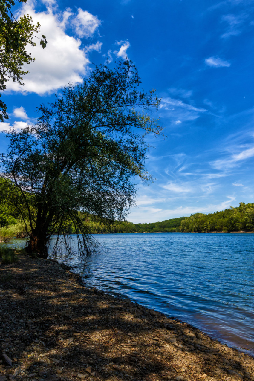 wuppertalsperre tree on lake