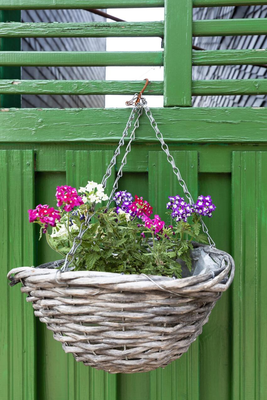 flower basket on a green fence