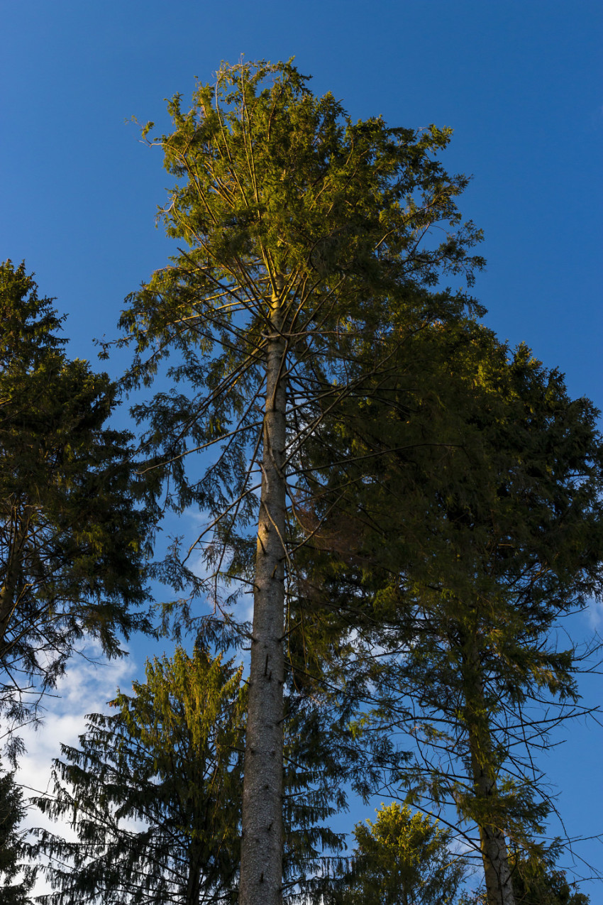 beautiful forest tree under blue sky
