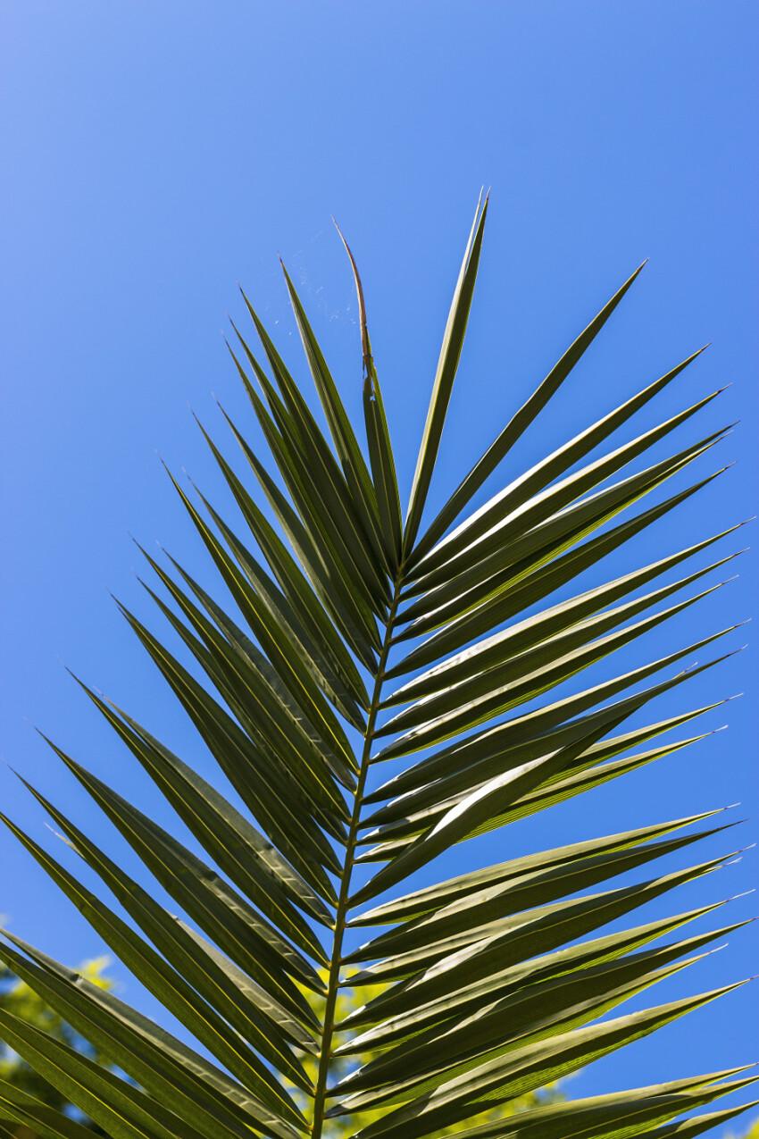 palm leaf on blue sky background