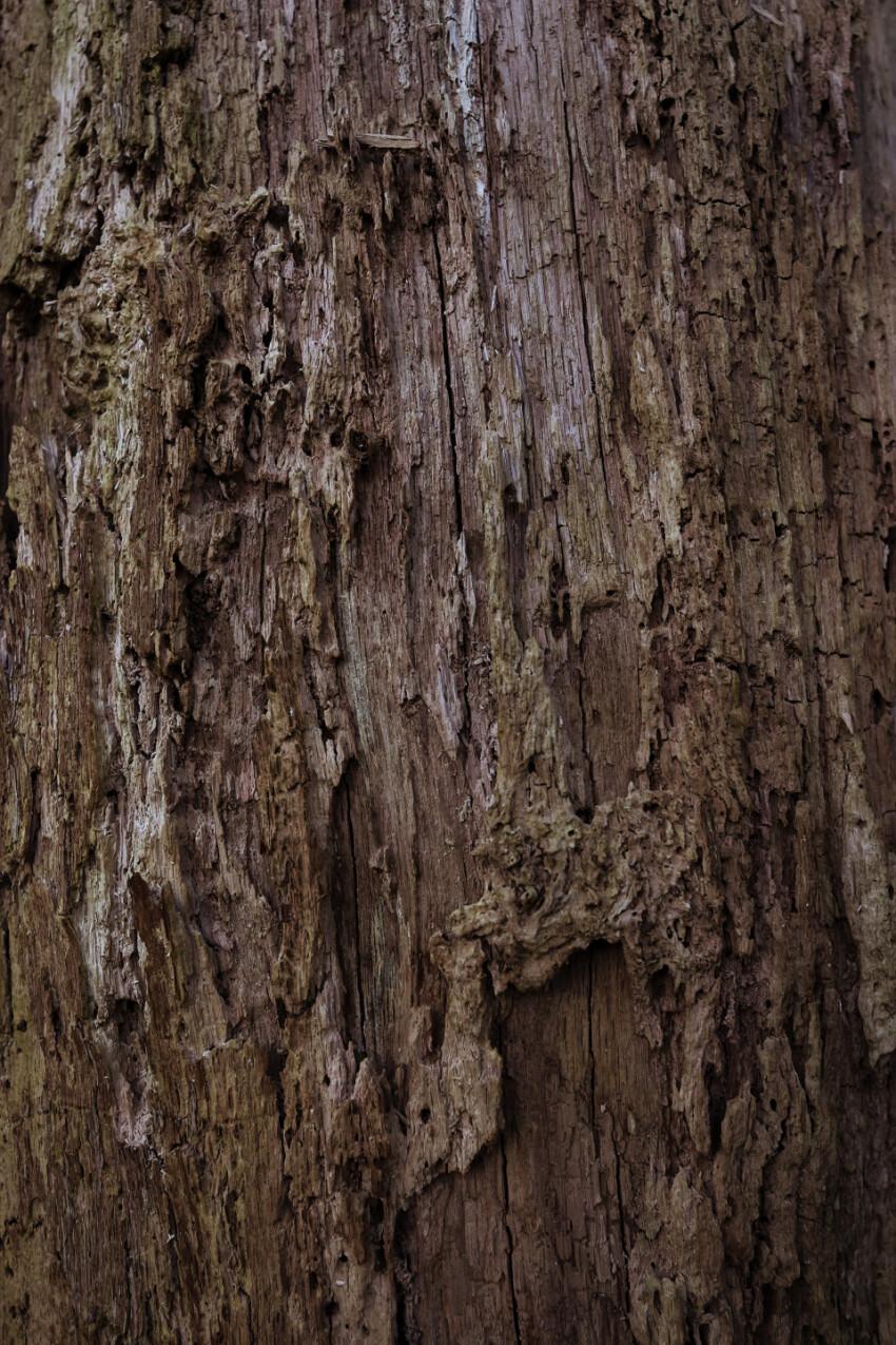 brown bark tree texture