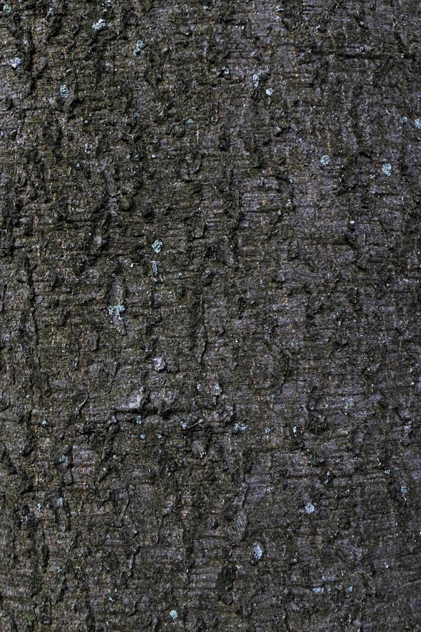 fine bark tree texture