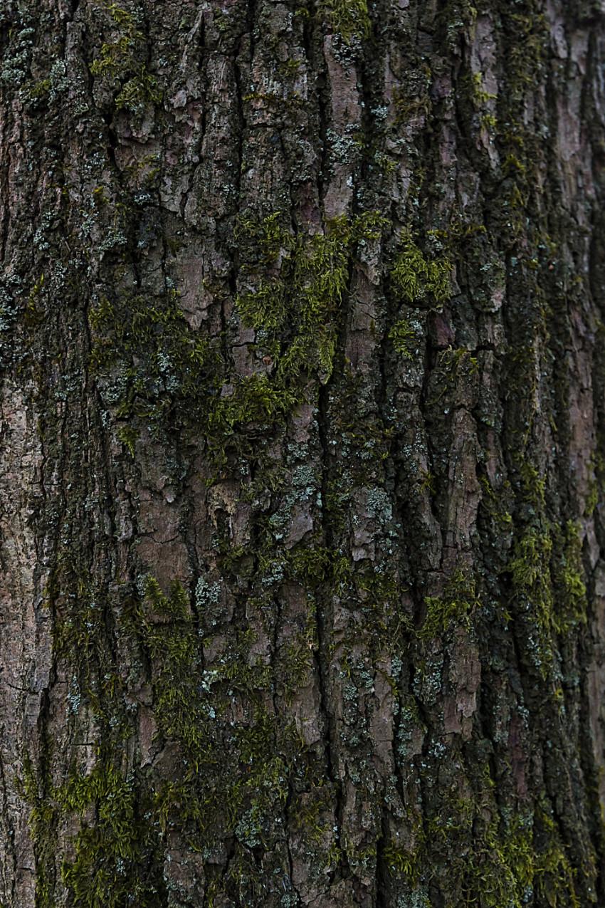 bark tree texture moss