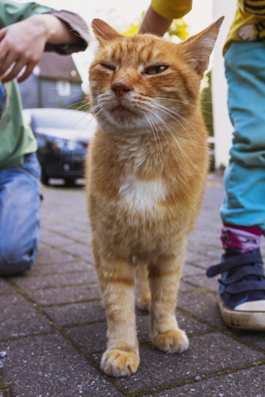 Cute ginger cat is being petted by children on a street
