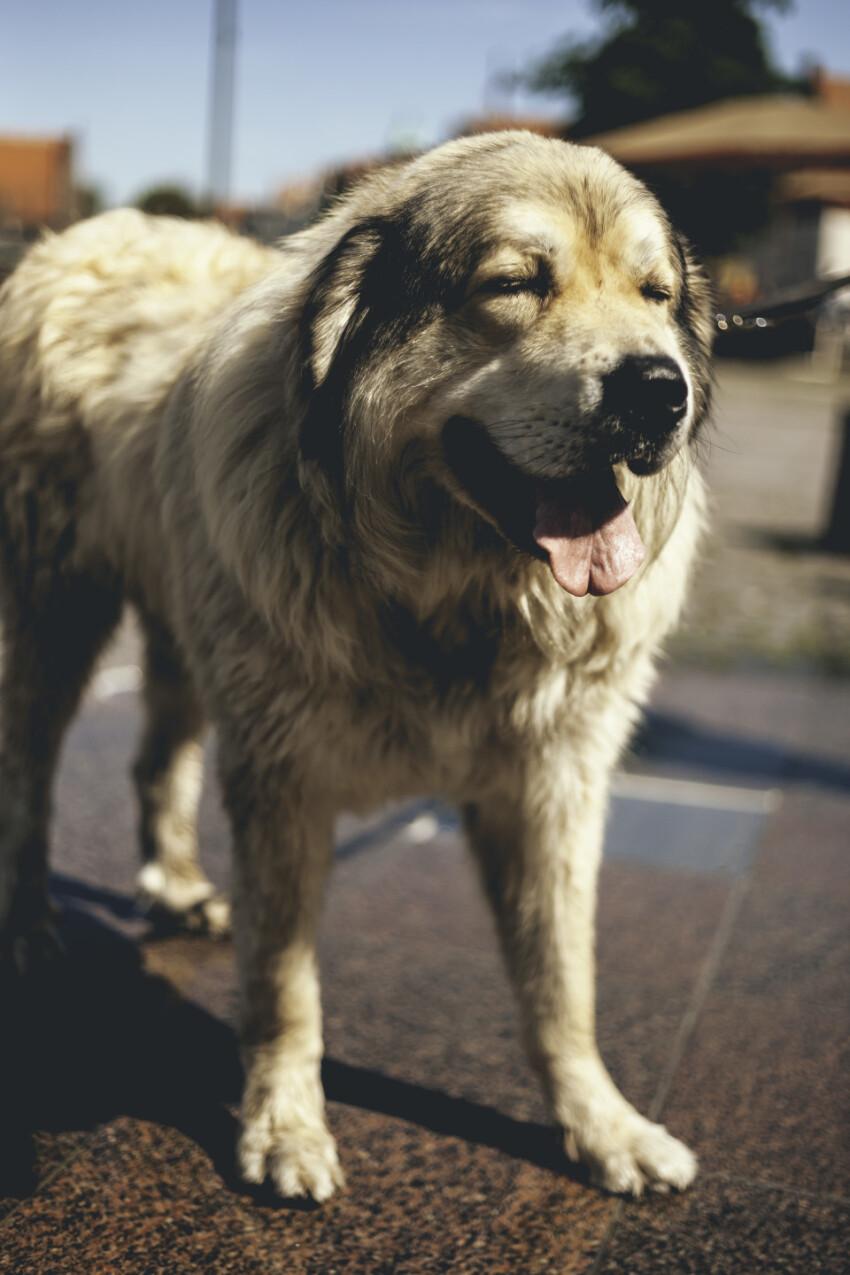 cute big dog in the city