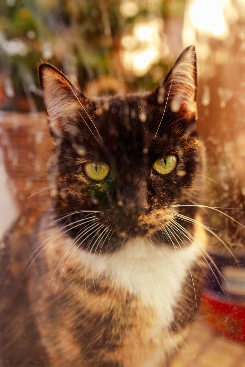 Cute colorful cat behind a window