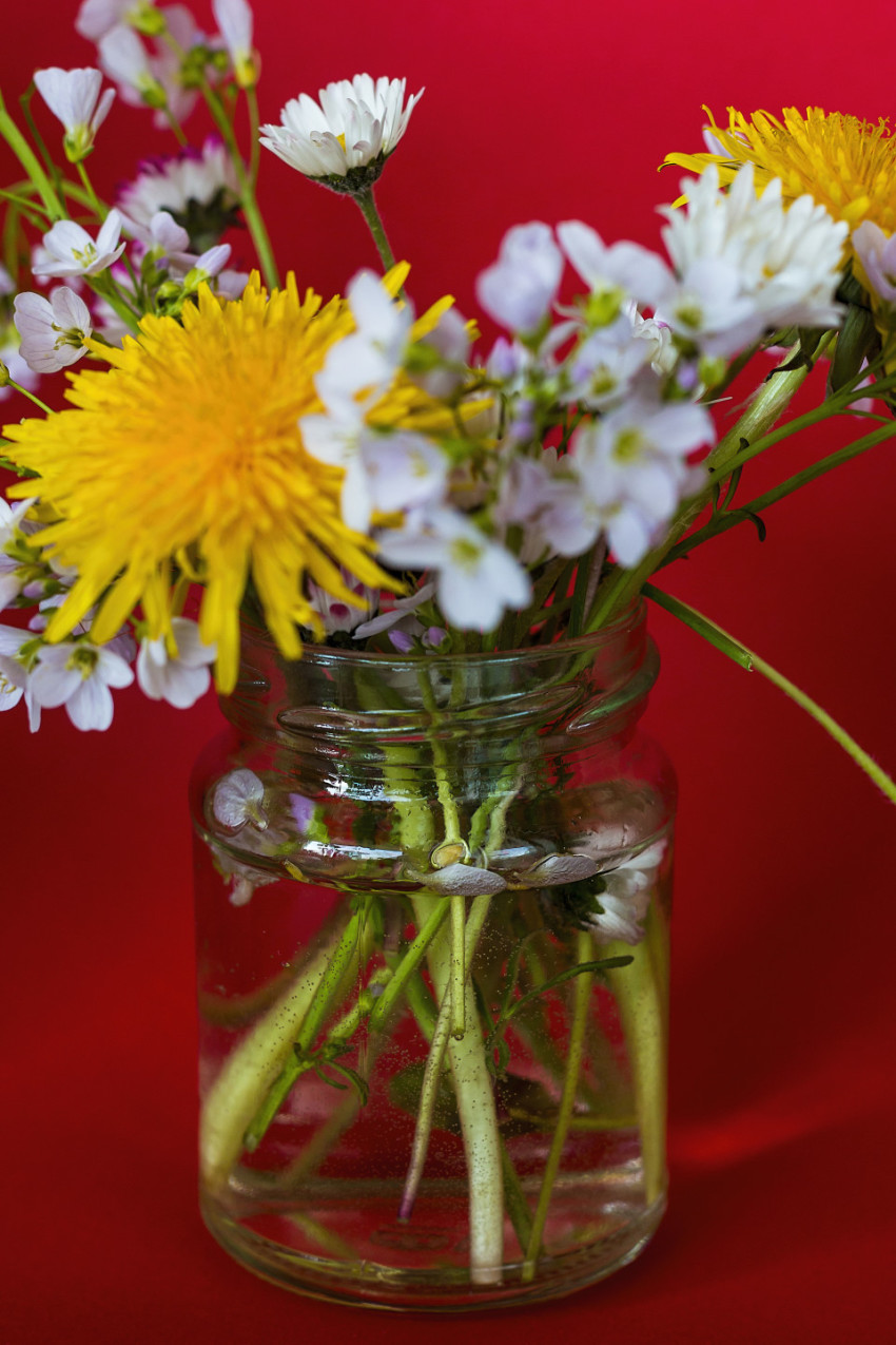 wild spring flowers in a glass red background