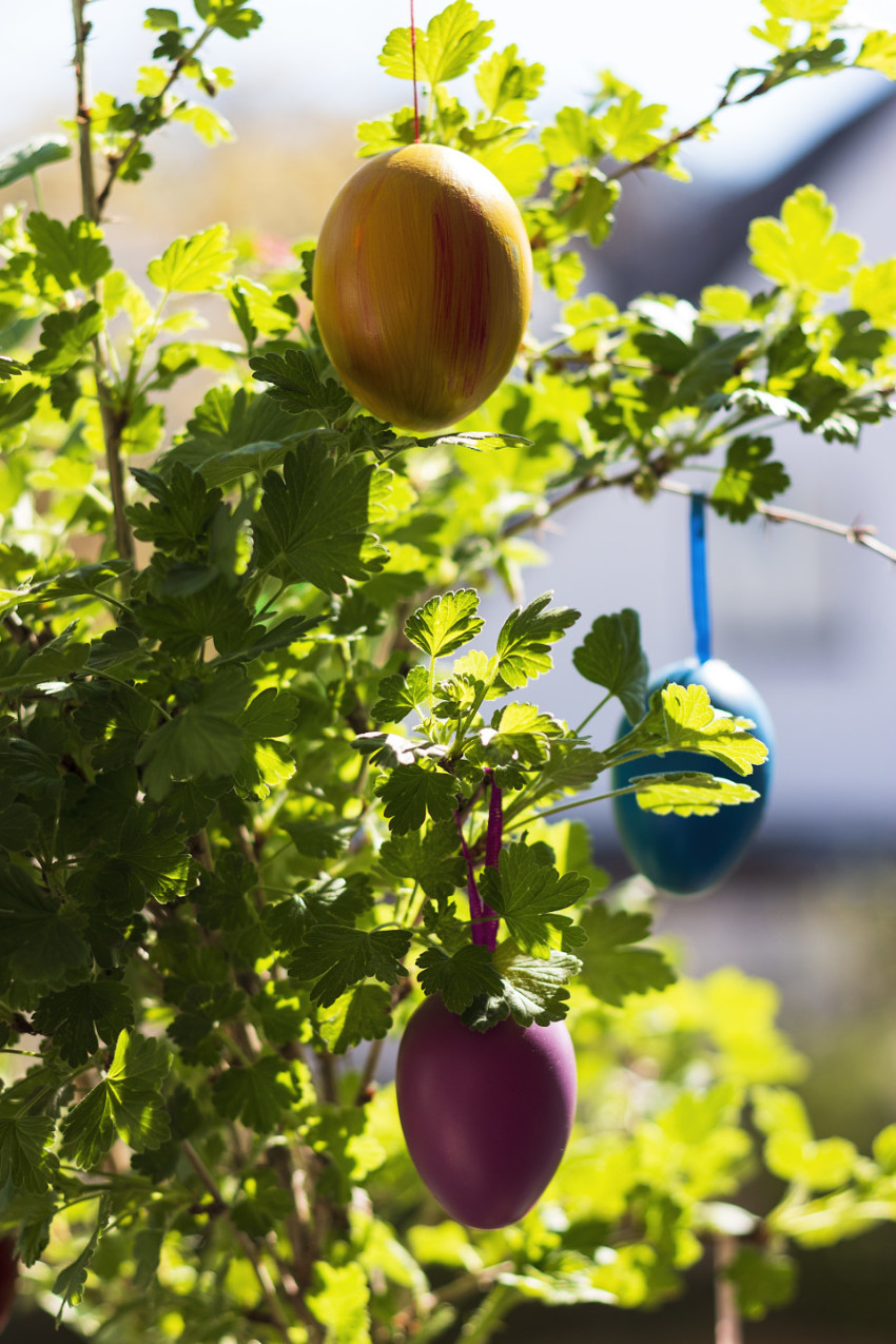 colorful easter eggs on a tree