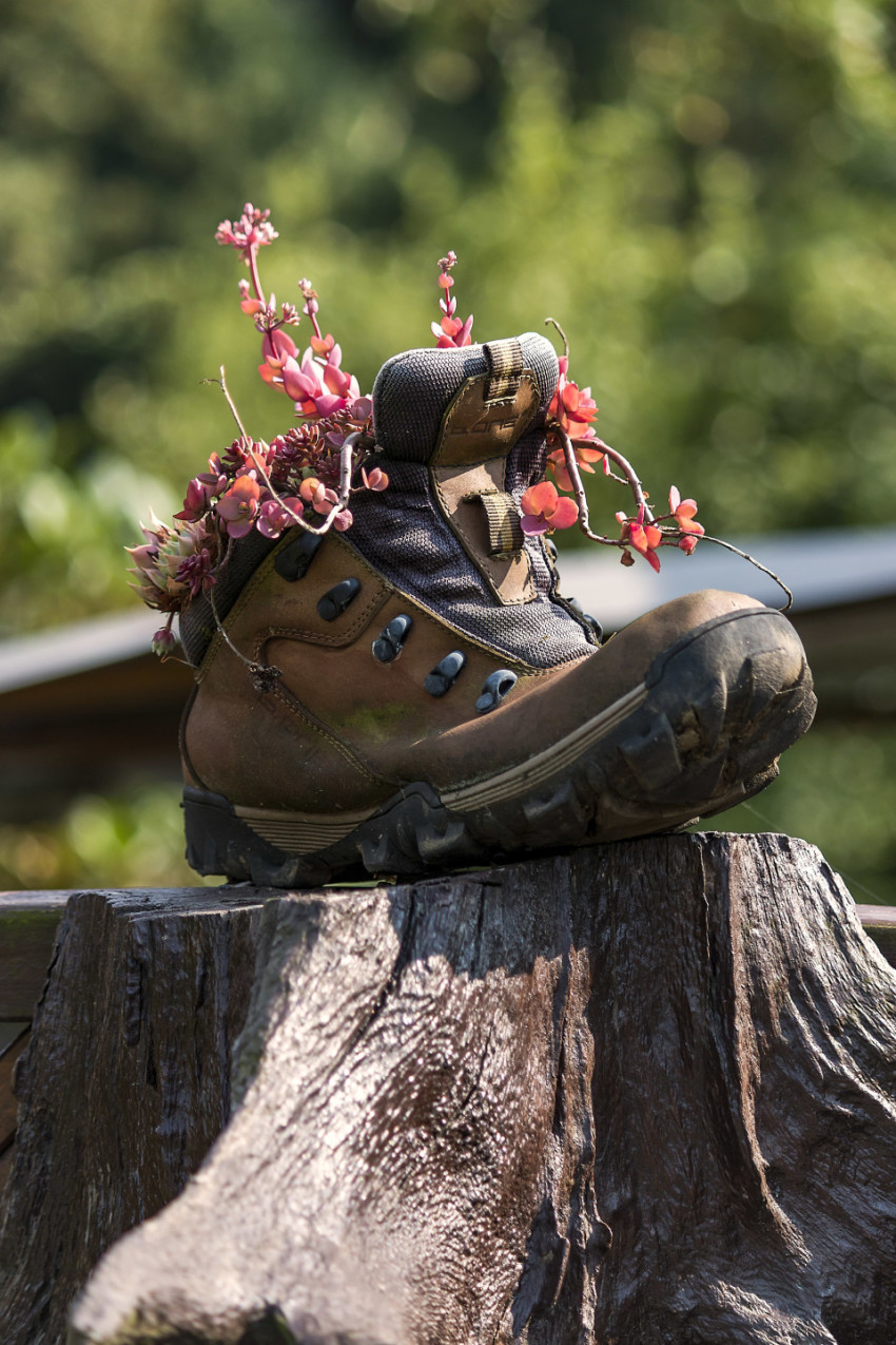 old shoe with flowers