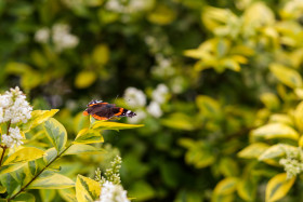 Stock Image: admiral butterfly sitting on a leaf