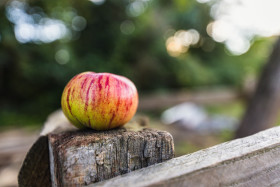 Stock Image: An apple lies on a fence post