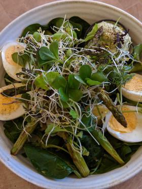 Stock Image: asparagus egg salad