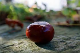 Stock Image: Autumn chestnut
