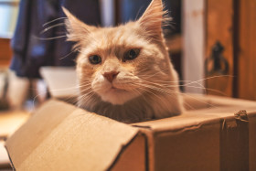 Stock Image: Cat in a box