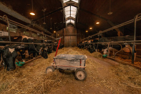 Stock Image: cowshed