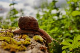 Stock Image: Creeping snail