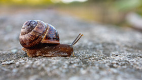 Stock Image: Cute brown snail