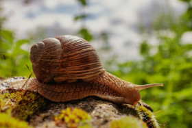 Stock Image: Cute Snail