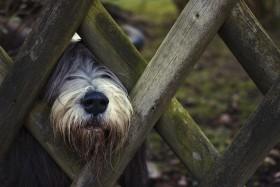 Stock Image: dog on the garden fence
