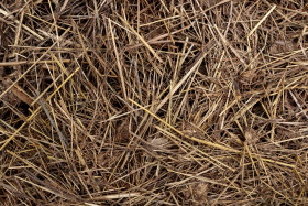 Dry straw or hay texture