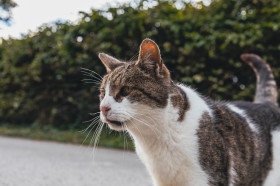 Stock Image: Encounter with a cat on the street