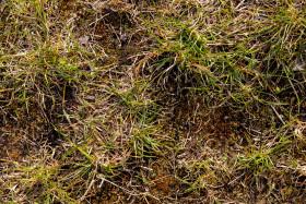 Stock Image: grass texture