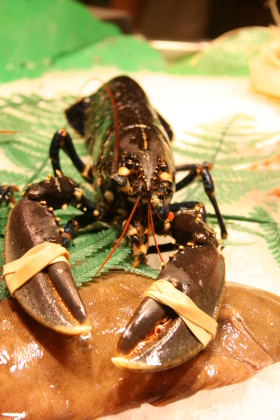 Stock Image: Lobster