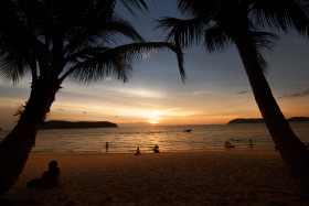 Stock Image: palm beach