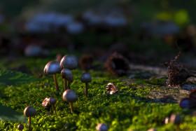 Stock Image: pretty mushrooms on forest floor