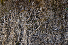 Stock Image: Root texture