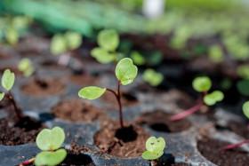 Stock Image: Seedlings