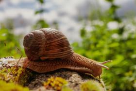 Stock Image: Snail in the Garden
