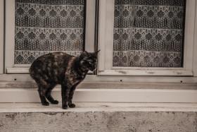 Stock Image: street cat on windowsill