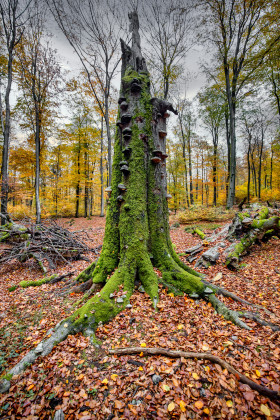 Stock Image: Tree trunk covered with moss and mushrooms