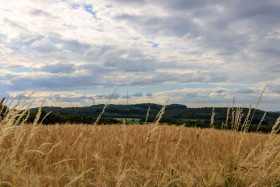 Stock Image: Wheat field